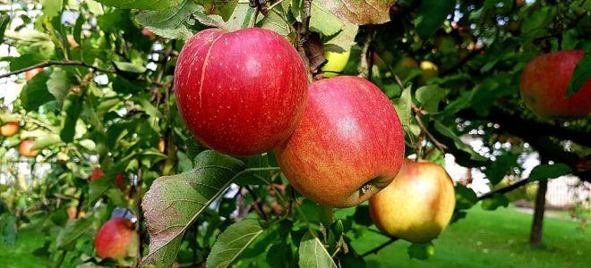 Какие фрукты не стоит есть при похудении